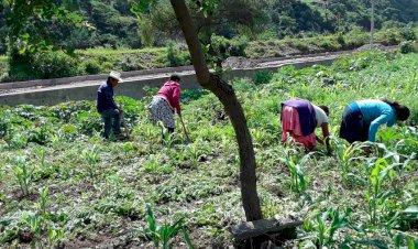 Campesinos antorchistas de Alcozauca realizan actividad económica